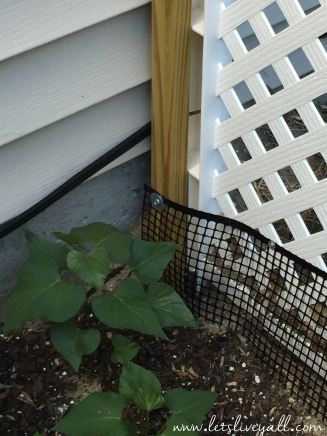 Lets Live Yall Garden Securing Chicken Wire